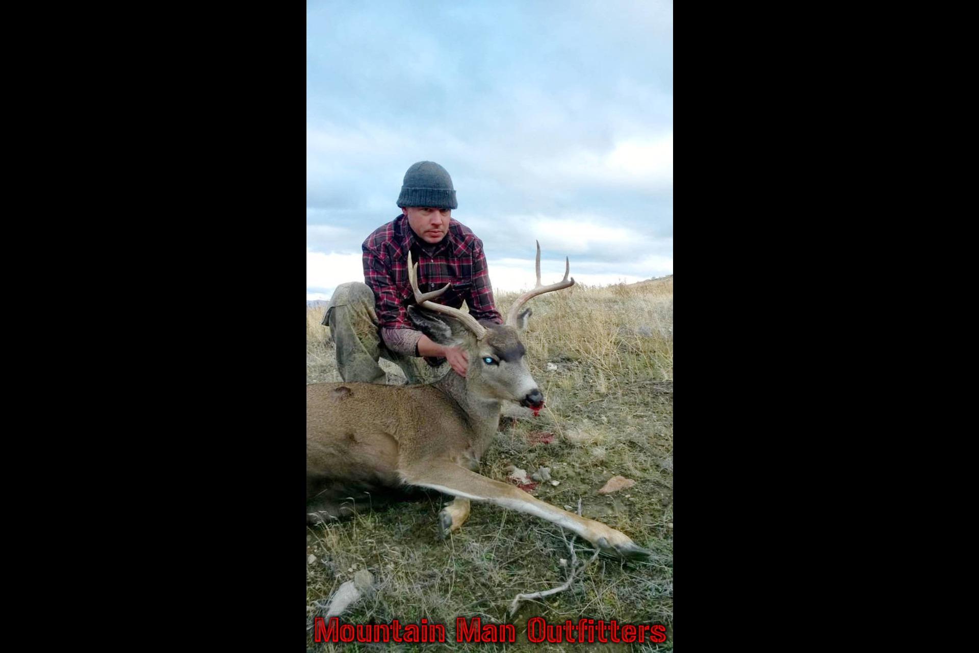 2015_mule_deer3