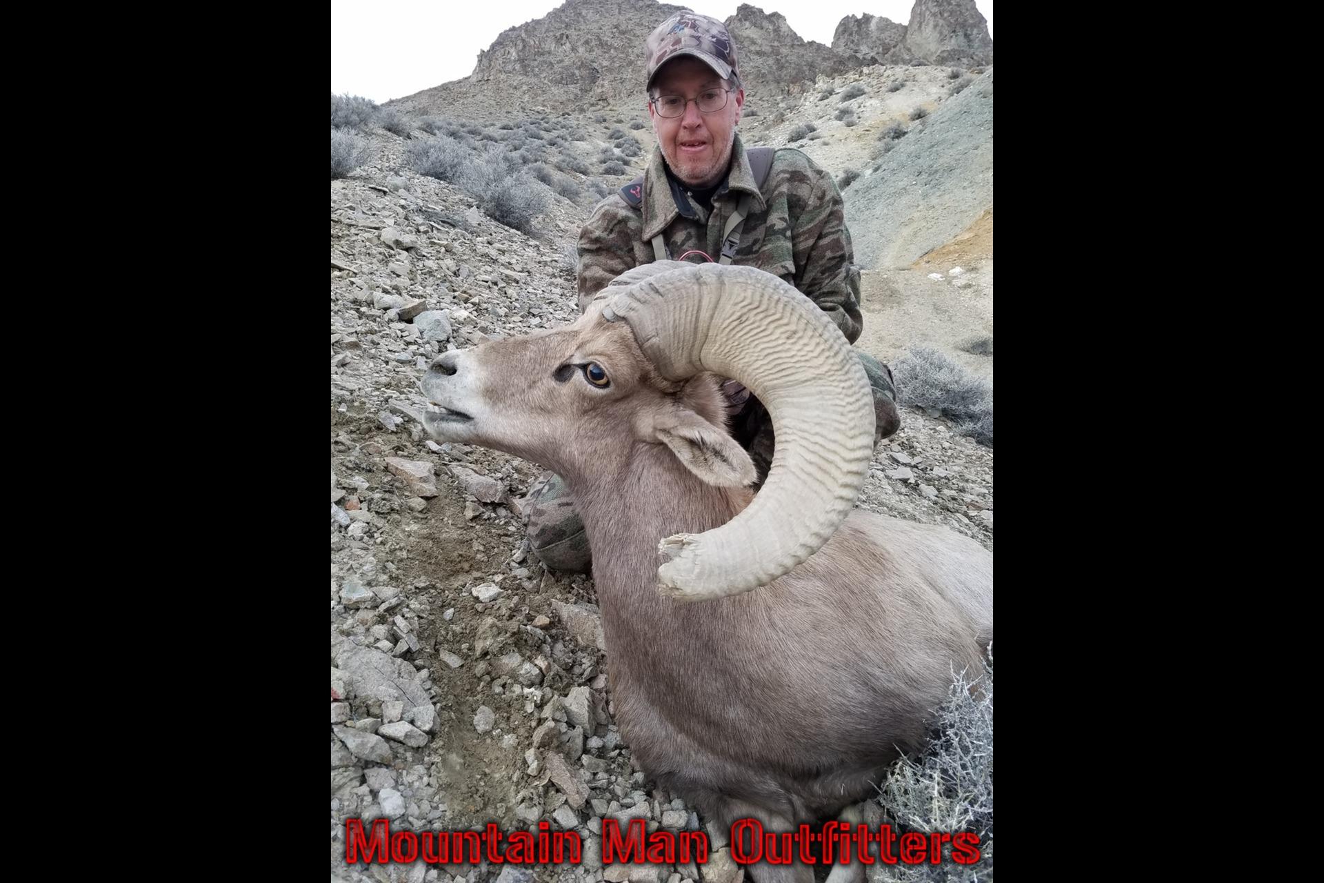 2016_bighorn_sheep1
