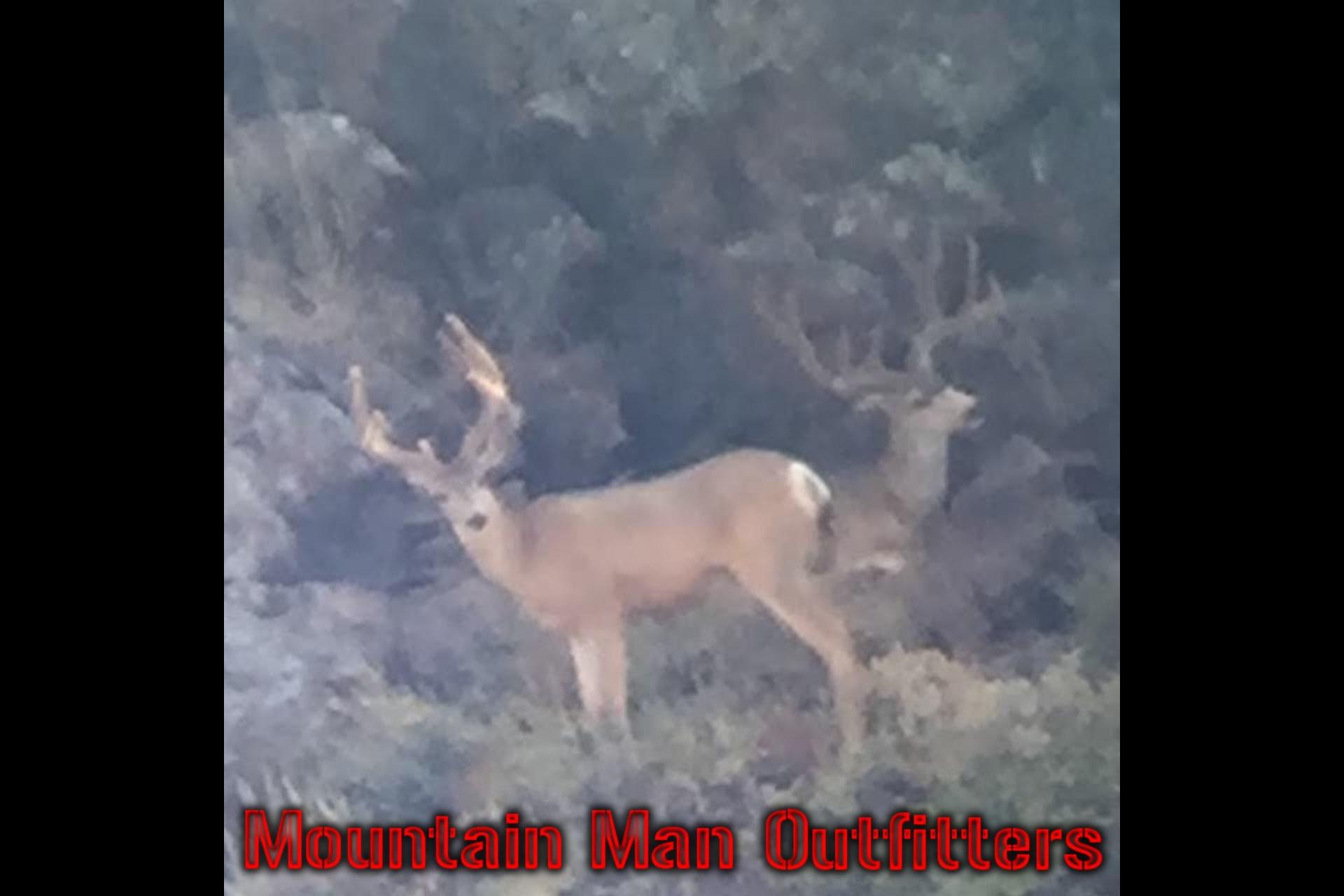 2016_mule_deer_scouting
