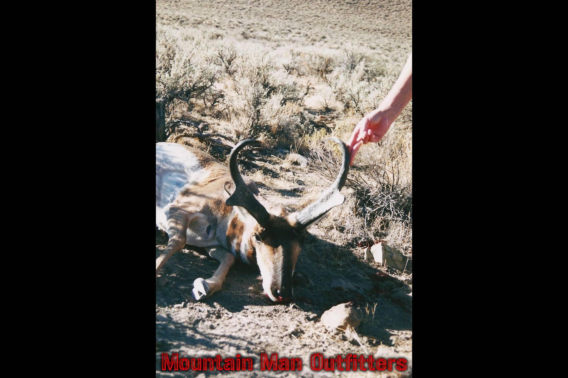 antelope_5