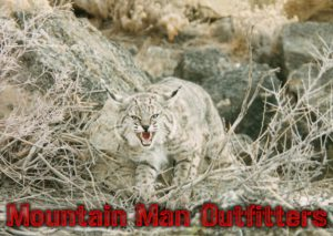 Predator Hunting in Northern Nevada